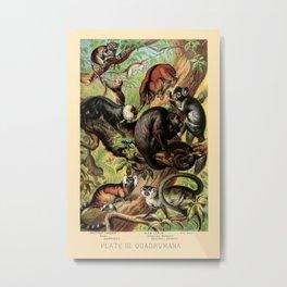 Vintage New World Monkeys Metal Print