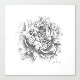 Peony In the Name of Love  Canvas Print