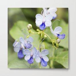 Blue Glory Bower Flowers Metal Print