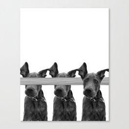Dog Crosses Line Canvas Print