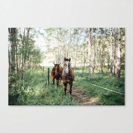 Summer Horses II Canvas Print