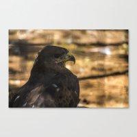hawk Canvas Prints featuring Hawk by Veronika