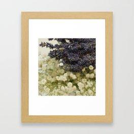 Lavender on gypsophila Framed Art Print