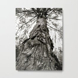 Oldest Tree in the Forest Metal Print
