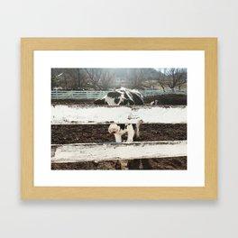 Anonymous Cow Framed Art Print