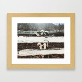 Anonymous Cow Framed Art Print