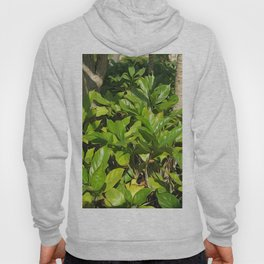 Leaves in The Morning Hoody