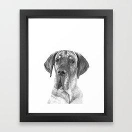 Black and White Great Dane Framed Art Print