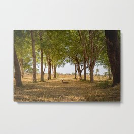 A Deer in the Forest Metal Print