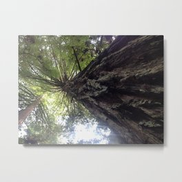 Redwood  Perspective by Mandy Ramsey Metal Print