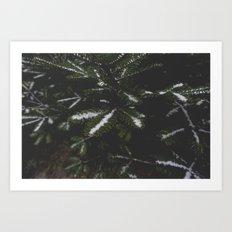 Firs. Art Print