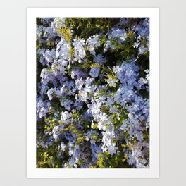 a violet flower in the heart of Athens Art Print