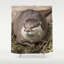Sunning Otter Shower Curtain