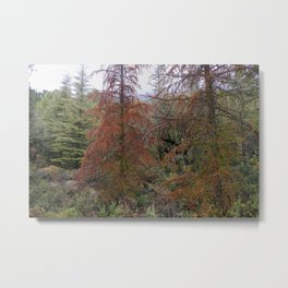 """""""Red tree"""". Deep forest at the mountains Metal Print"""