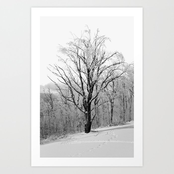Maple Tree in Winter Art Print