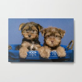 Two Yorkshire Terrier Puppies Hold Paws in a Blue and White Snowflake Basket Metal Print