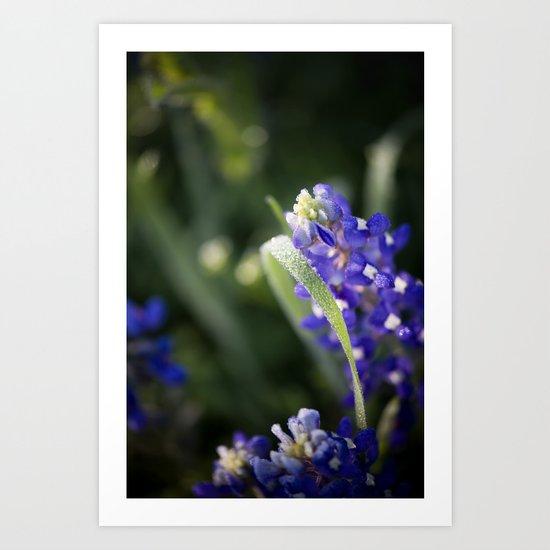 Blue Morning Dew Art Print