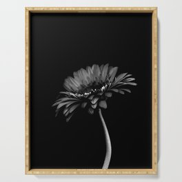Daisy gerbera. Black and white Serving Tray