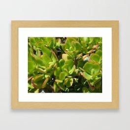 Jade Plant Framed Art Print