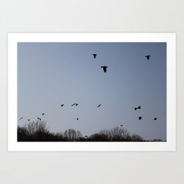 Flying birds. Art Print