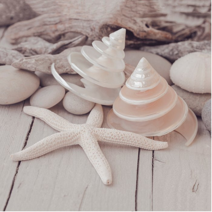 Beach Still Life With Shells And Starfish Comforters