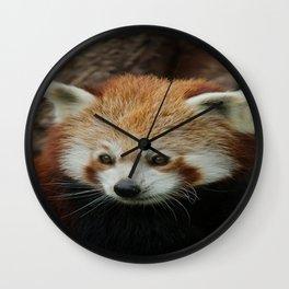 Watchful Red Panda Wall Clock