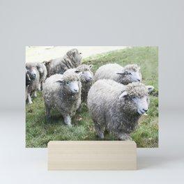 Herd of white sheep Mini Art Print