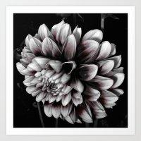 dahlia Art Prints featuring Dahlia by BavosiPhotoArt