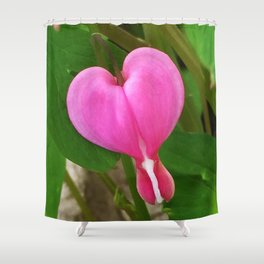 445 - Bleeding Heart Shower Curtain