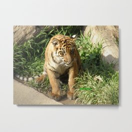 Young Tiger Metal Print