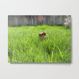 Backyard Wildlife  Metal Print