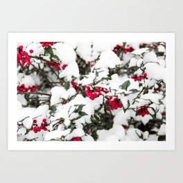 SNOW COVERED HOLLY Art Print