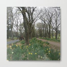 Twin Oaks Drive One Tree Hill Metal Print