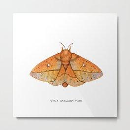 Spiny Oakworm Moth (Anisota stigma) Metal Print
