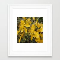 marc johns Framed Art Prints featuring Beautiful St Johns Wort by Wendy Townrow