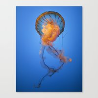 jelly fish Canvas Prints featuring Jelly Fish by THEPALMER