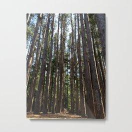 Tall Pines Metal Print