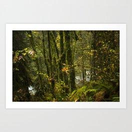 Portland Rainforest Art Print
