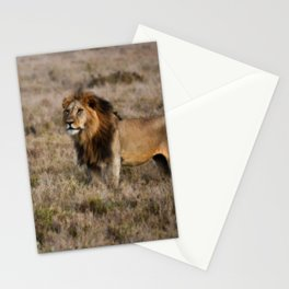 African Lion in Kenya Stationery Cards