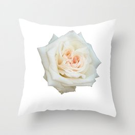 Close Up View Of A Beautiful White Rose Isolated  Throw Pillow