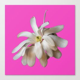Star Magnolia on Pink Background Canvas Print