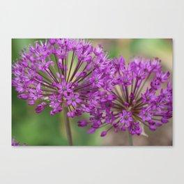 Purple Allium Twins Canvas Print