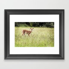 Dear Baby Deer  - Fawn Framed Art Print
