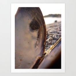 Through the sea shell Art Print