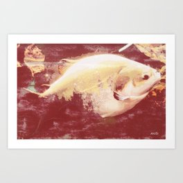 A big fish... literally Art Print