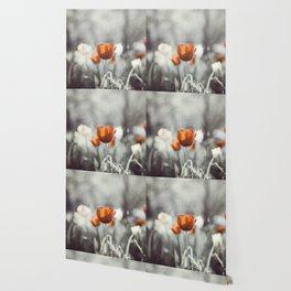 Orange Grey Tulip Photography, Burnt Orange Tulip Flowers Photo Wallpaper