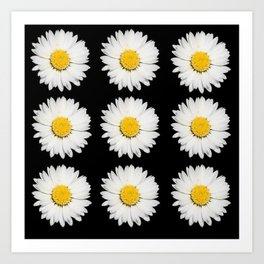 Nine Common Daisies Isolated on A Black Backgound Art Print