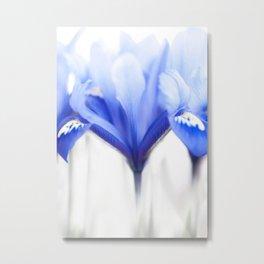Blue Iris 1 Metal Print