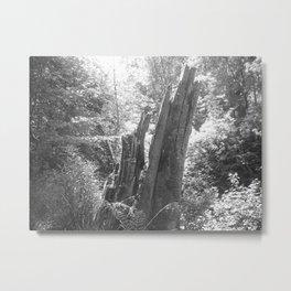 Walk in the woods lightning tree Metal Print