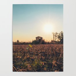 Corn field at sunset in the countryside of Lomellina Poster